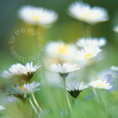 Daisies for the eighth of may front